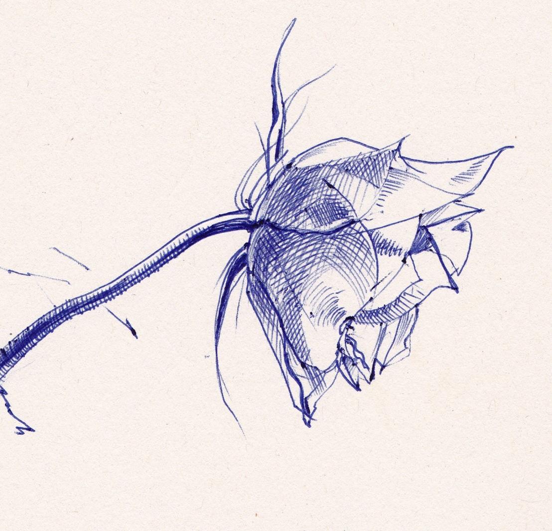 Weer een roos